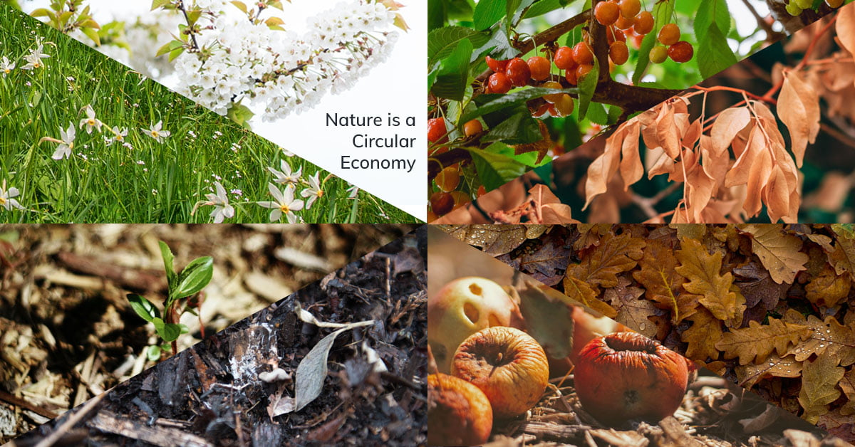 Nature is a circular economy